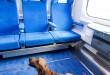 PKP Intercity - bilet online dla psa